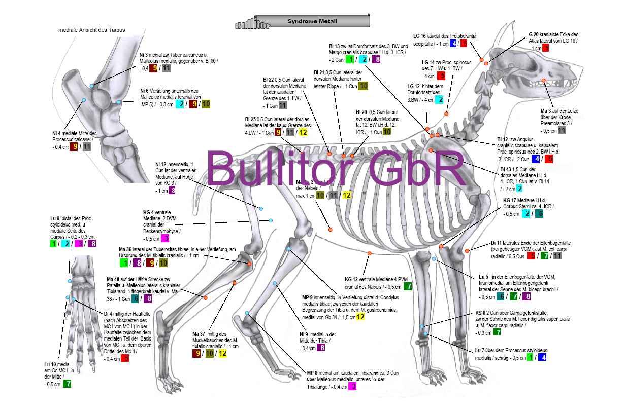 Akupunkturpunkte beim Hund - Syndrome - Tierakupunktur-Tafeln
