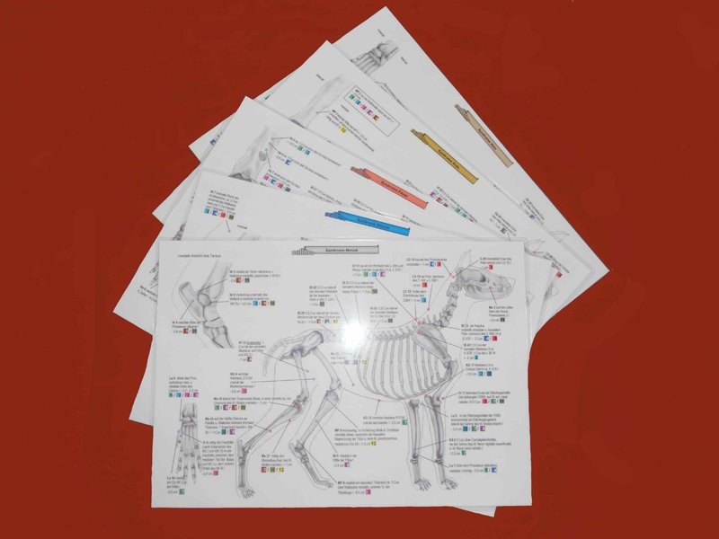 Canine Acupuncture Charts - Syndroms - German