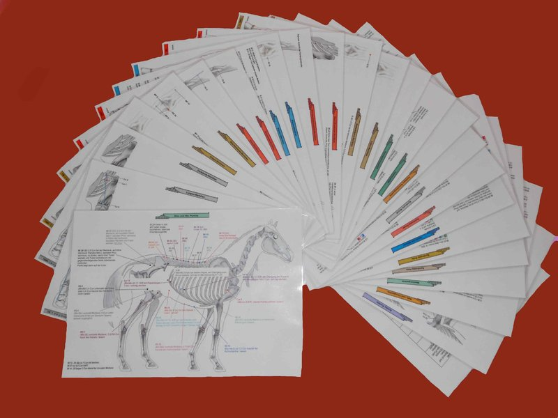 Acupuncture Charts for Horses - Complete Set - German