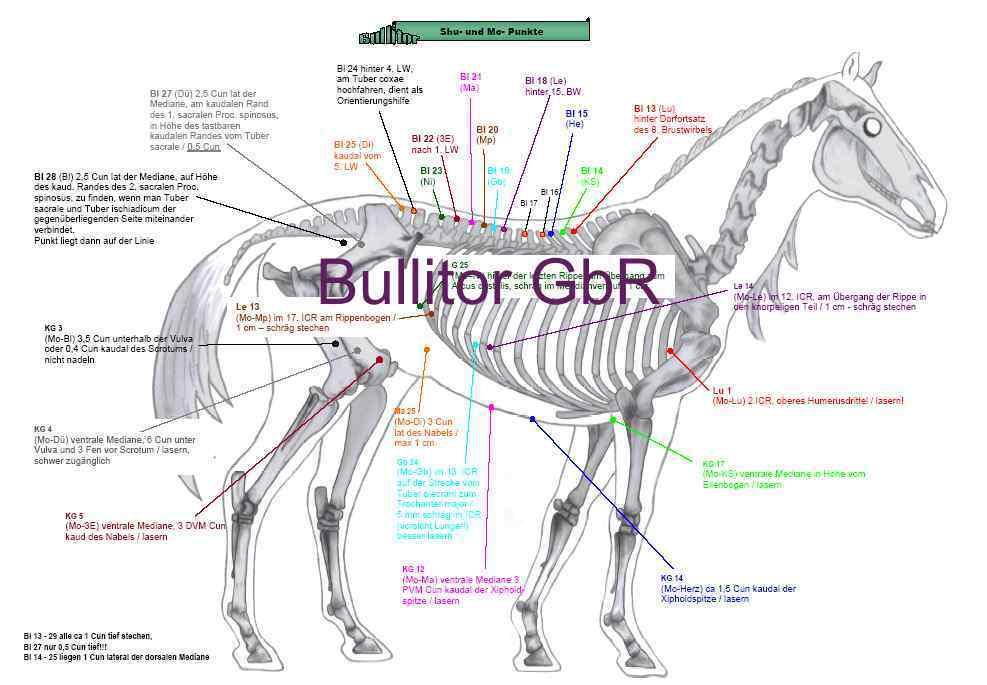 Ziemlich Anatomie Eines Pferdes Galerie - Anatomie Ideen - finotti.info