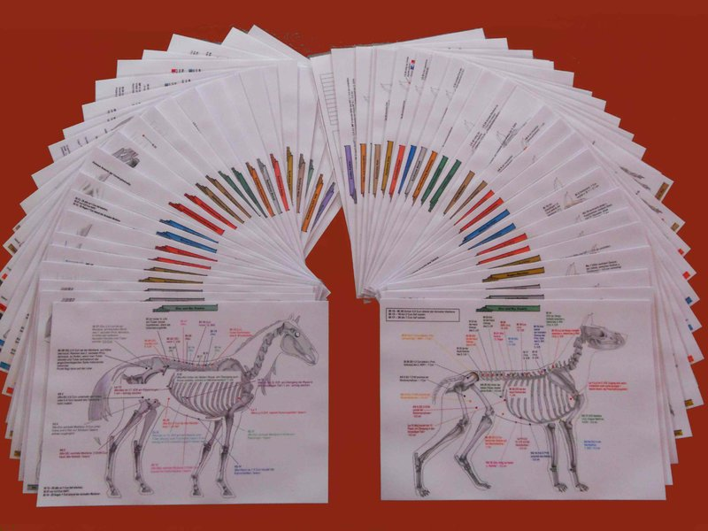 Acupuncture Charts for Horses and Dogs - Complete Set - German