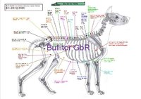 Canine Acupuncture Charts