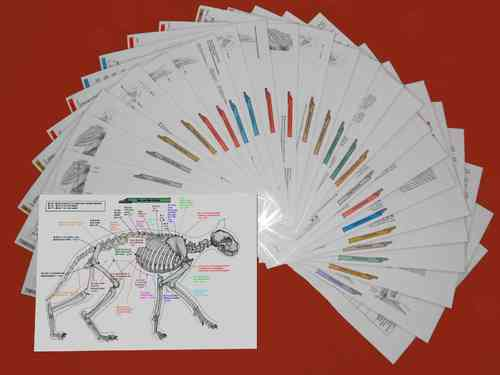 Acupuncture Charts Cats - Complete Set - German