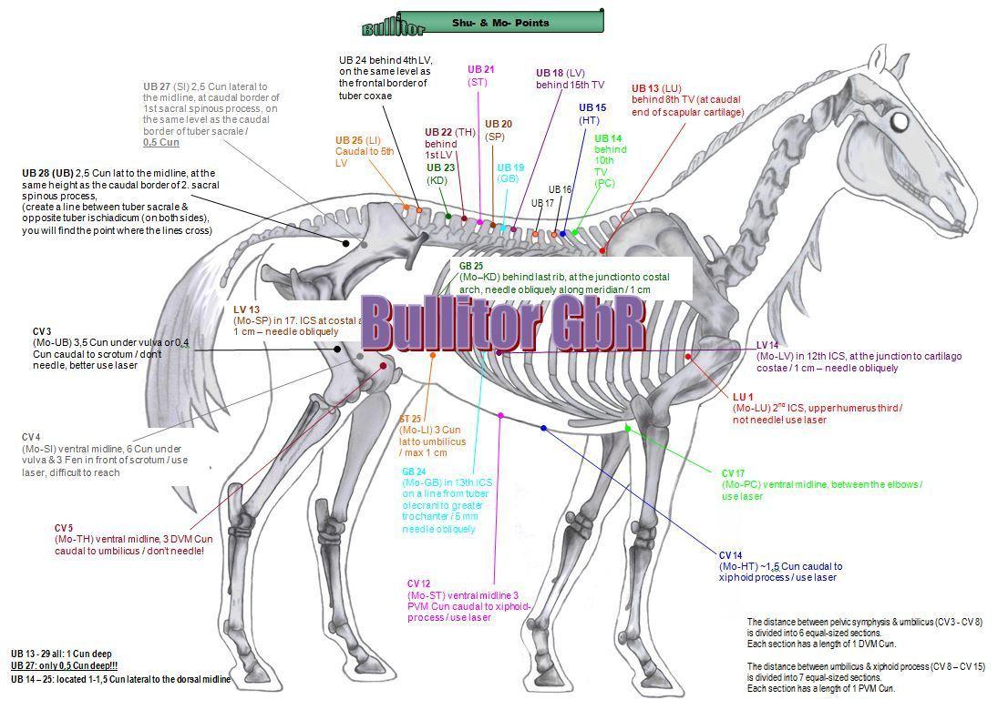 pferd auf englisch