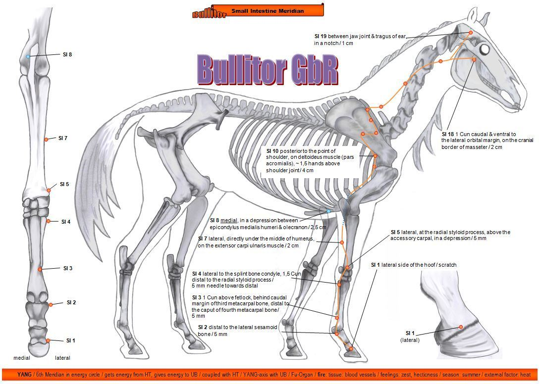 Important Points in Horse Acupuncture - 16 Charts