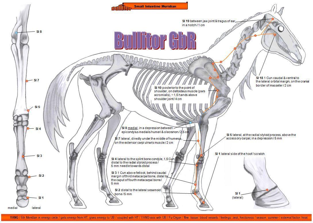 Tolle Pferd Anatomie Charts Bilder - Anatomie Von Menschlichen ...