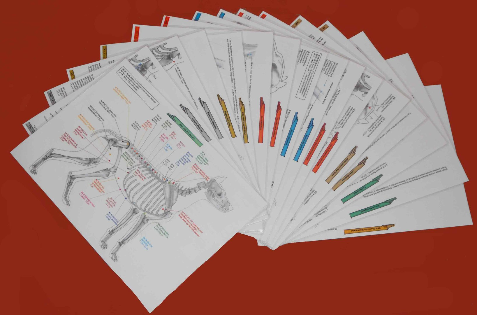 Acupuncture Charts for Dogs - Standard Set