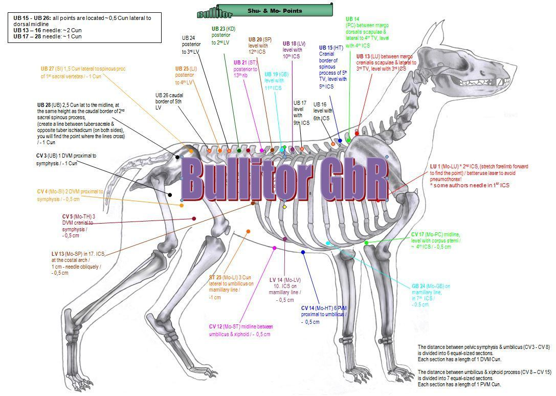 Bullitor - Important Points in Dog Acupuncture - 16 Charts