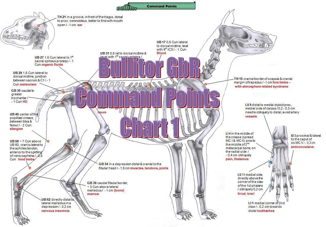 Acupuncture Charts for Dogs - Extra Set