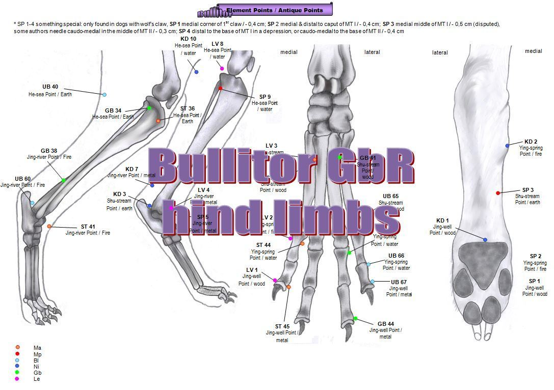 Bullitor - Acupuncture Charts for Dogs - Extra Set