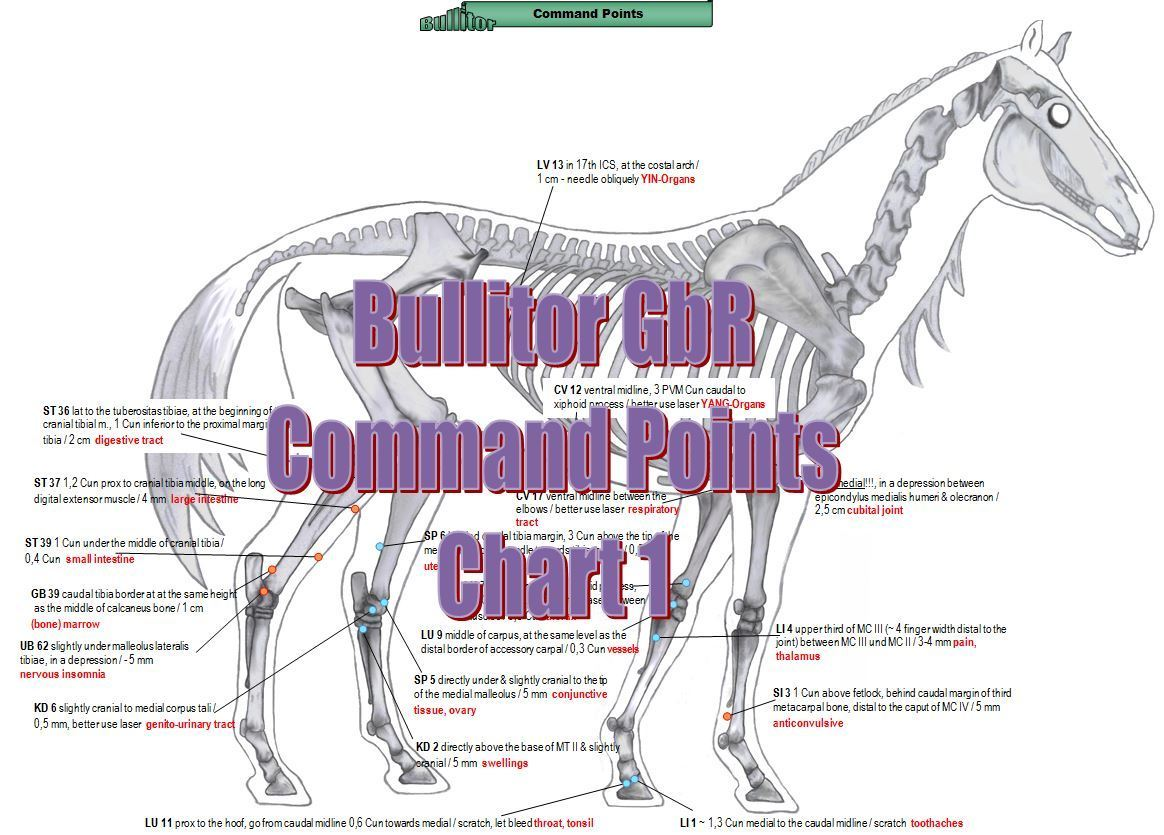 Acupuncture Charts for Horses - Extra Set