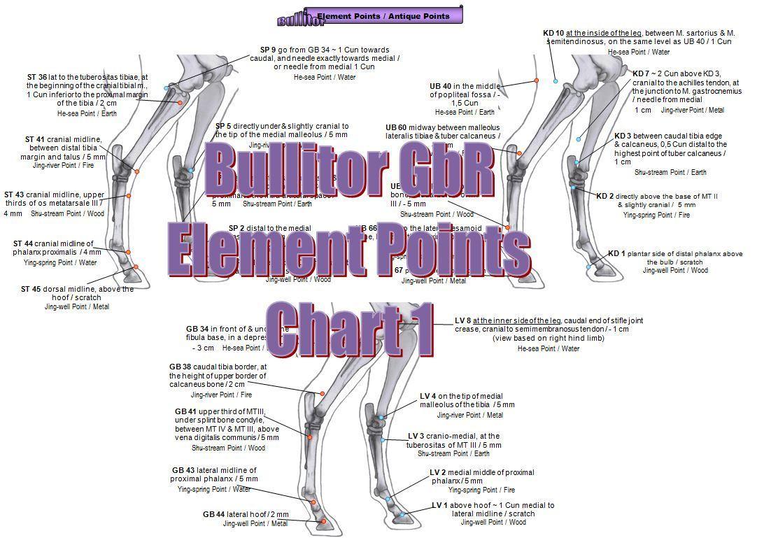 Akupunkturpunkte beim Pferd - Extra Set - Englisch