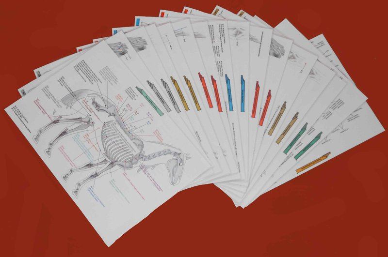 Acupuncture Charts for Horses - Standard Set - German
