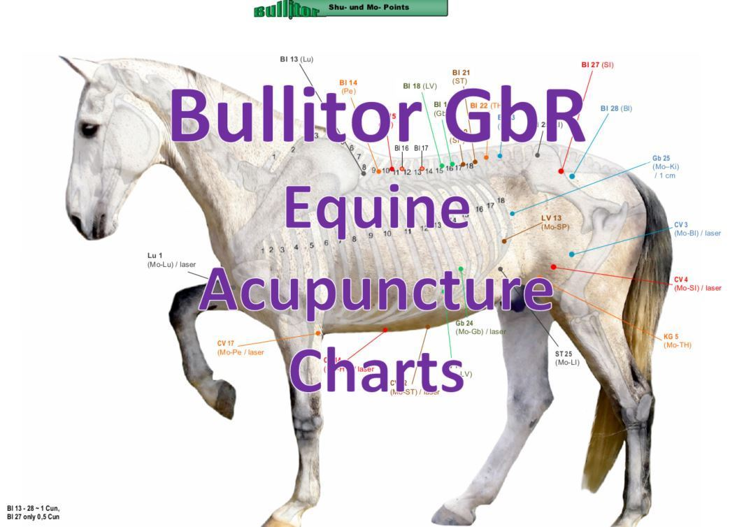 Equine Acupuncture Charts - Important Points in Horse Acupuncture