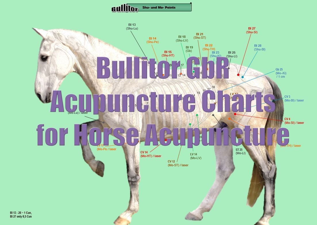 Equine Acupuncture Charts - Important Points in Horse Acupuncture - Download
