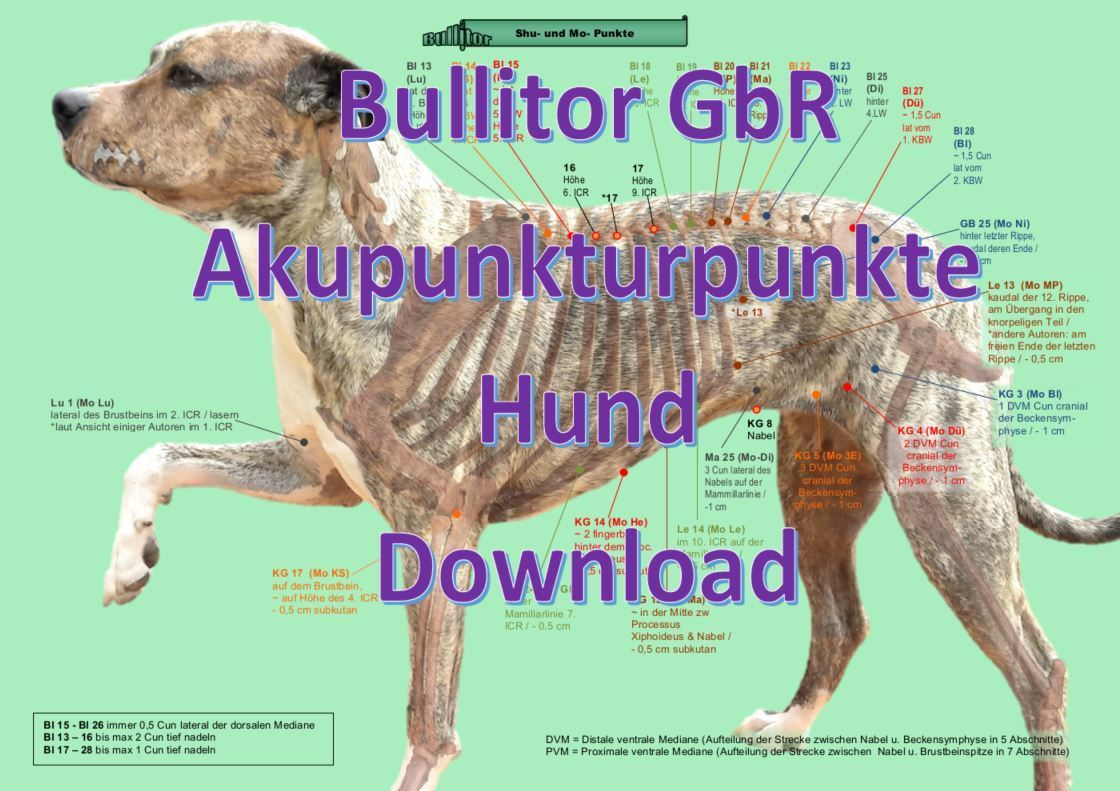 Akupunkturpunkte beim Hund - 2020 Download